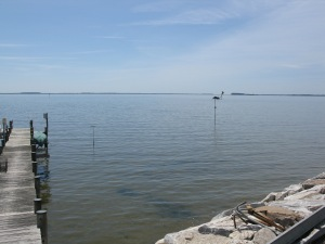 View from back yard down dock-perch and pole