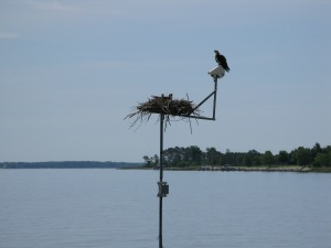 tom on camera audrey in nest