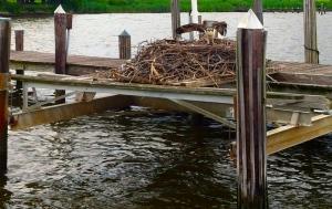Dock Osprey