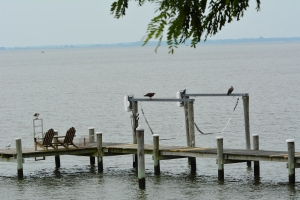I spy an osprey with a fish (hint: he's on the left)