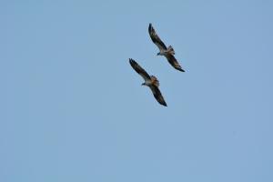 Siblings in flight