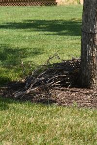COM's supply of sticks for the 2015 season