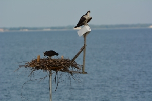 A peaceful scene at the nest when there was a family of four