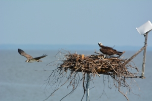 E.T. approaching the nest