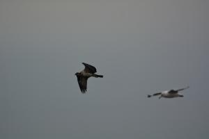 Gull Photo Bomb
